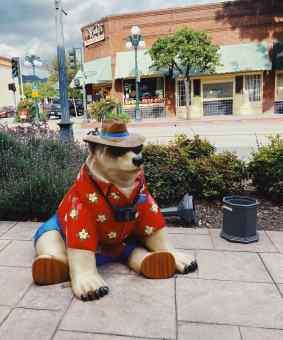 samson the bear